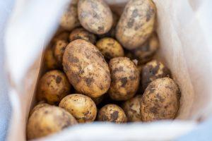 Kartoffeln frisch ab Feld