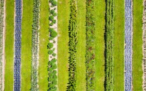 Schnittblumenfeld vomeichhof.ch in Egliswil von oben